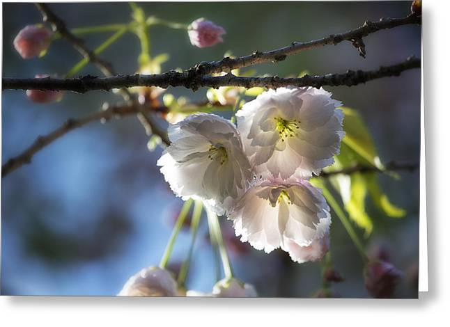 Incised Greeting Cards - Mt Fuji Blossom 1 Greeting Card by Belinda Greb