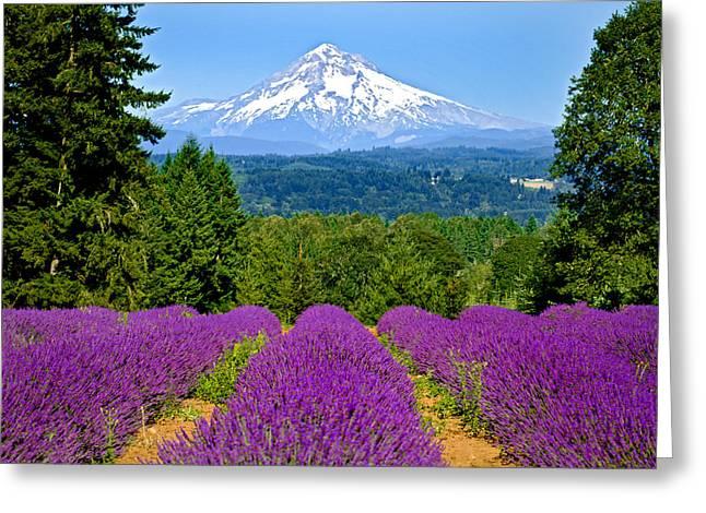 Snow Tree Prints Greeting Cards - Mt Hood over lavender field Greeting Card by Engin Tokaj
