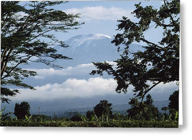 Snow Capped Greeting Cards - Mt, Kilimanjaro Greeting Card by David Constantine