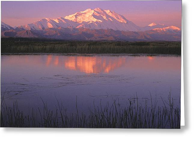 Beautiful Scenery Greeting Cards - Mt Mckinley Relfected In Tundra Pond Greeting Card by John Warden