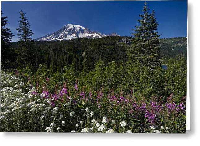 Wildflower Photos Greeting Cards - Mt. Rainier Greeting Card by Adam Romanowicz