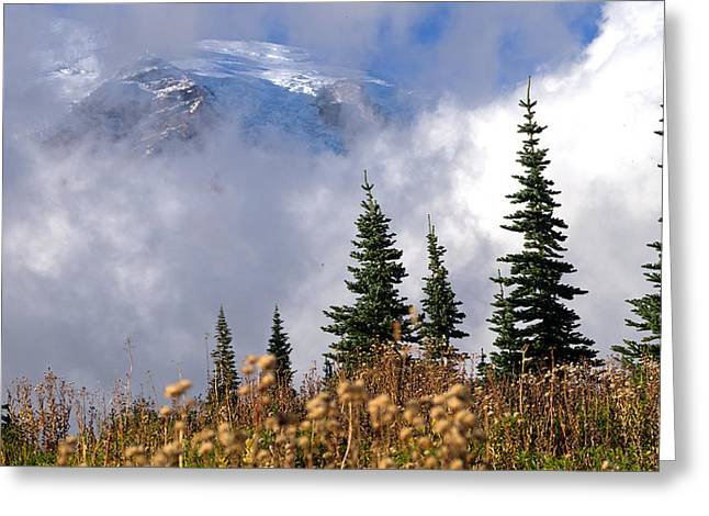 Scott Nelson Paintings Greeting Cards - Mt Rainier Cloud Meadow Greeting Card by Scott Nelson