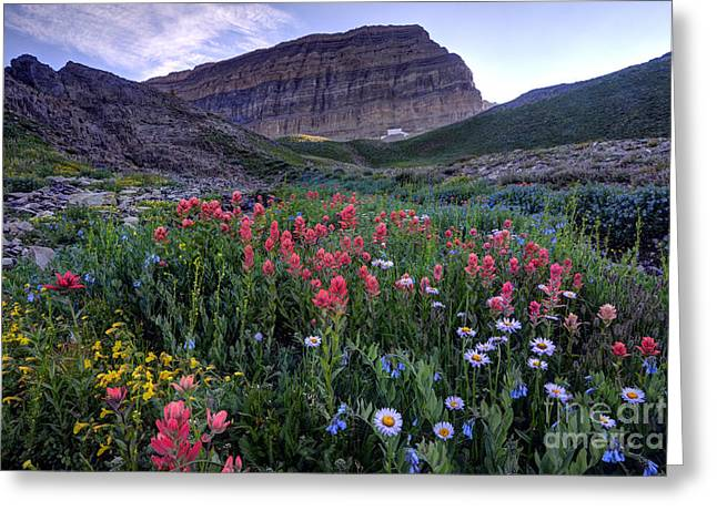 Aster Greeting Cards - Mt. Timpanogos Wildflowers at Sunset Greeting Card by Gary Whitton