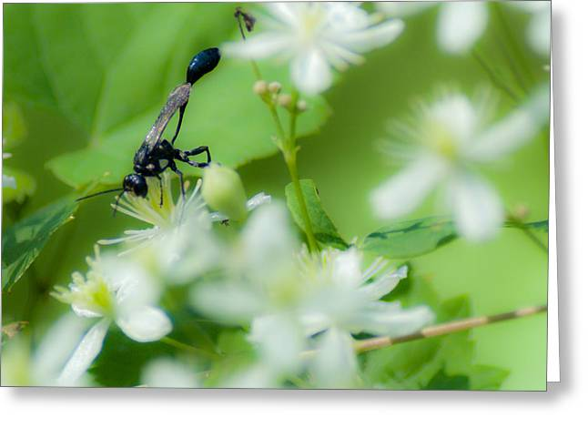 Mud Nest Greeting Cards - Mud Dauber in the flowers Greeting Card by Optical Playground By MP Ray