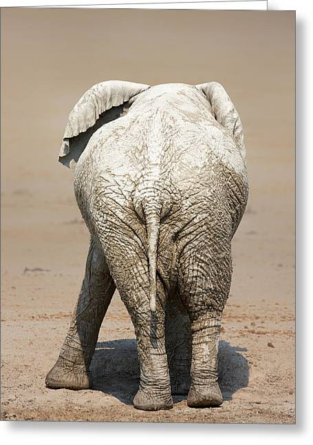 Stands Greeting Cards - Muddy elephant with funny stance  Greeting Card by Johan Swanepoel