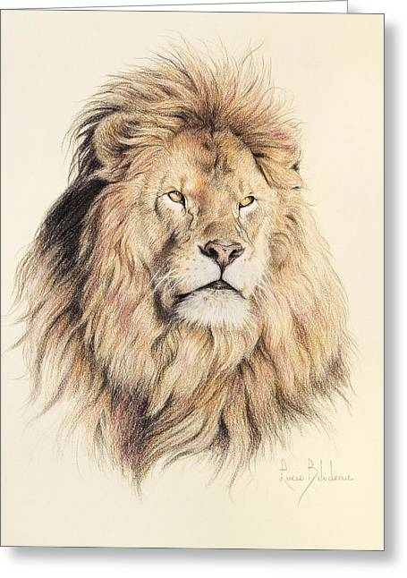 Animals Drawings Greeting Cards - Mufasa Greeting Card by Lucie Bilodeau