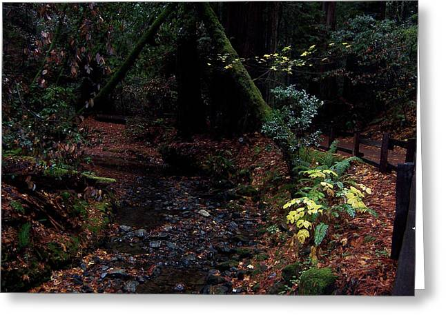 Best Sellers -  - Forest Pyrography Greeting Cards - Muir woods-7 Greeting Card by Antoaneta Melnikova- Hillman