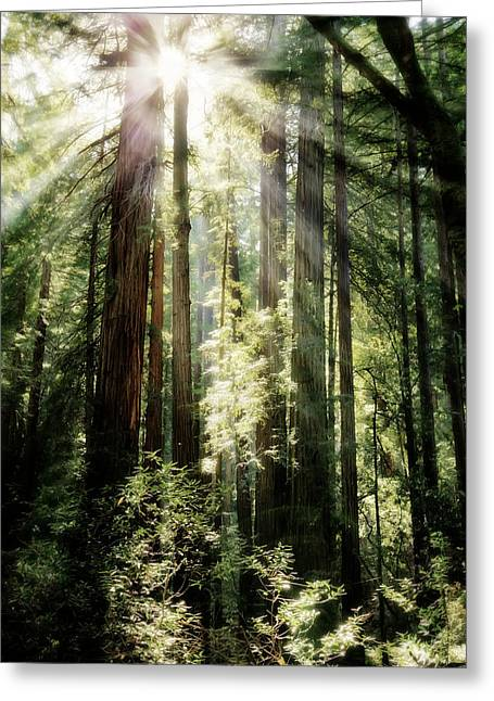 Marin County Greeting Cards - Muir Woods Forest - Red Wood Trees Greeting Card by The  Vault - Jennifer Rondinelli Reilly