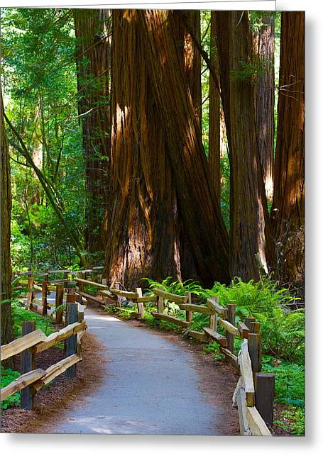Autum Abstract Greeting Cards - Muir Woods Greeting Card by Michael Blesius