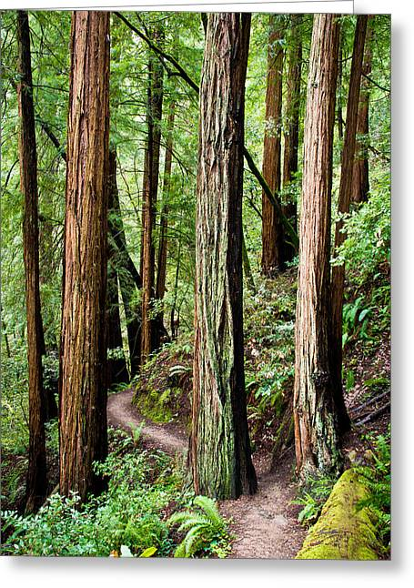 Sausalito Greeting Cards - Muir Woods Greeting Card by Niels Nielsen