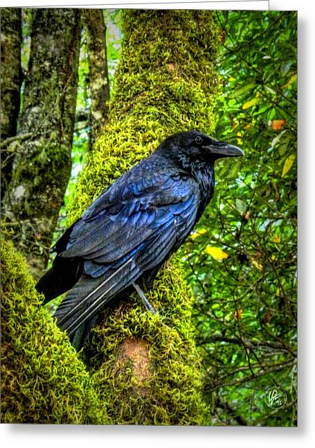 Old Growth Greeting Cards - Muir Woods Raven 001 Greeting Card by Lance Vaughn