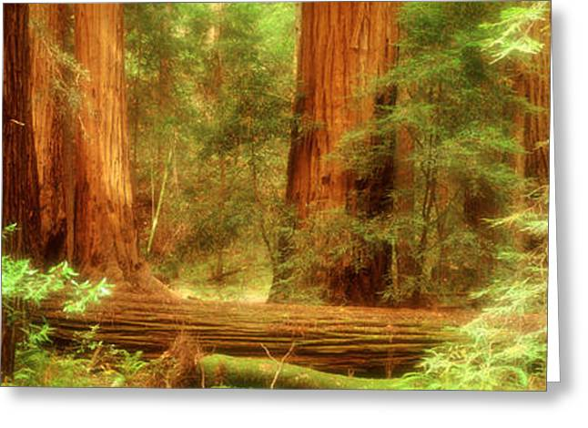 Old Growth Greeting Cards - Muir Woods, Trees, National Park Greeting Card by Panoramic Images