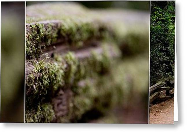 Marin County Greeting Cards - Muir Woods Triptych Greeting Card by Andrew Brooks