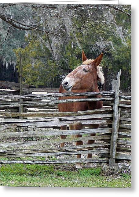 Split Rail Fence Greeting Cards - Mule behind Split Rail Fence Greeting Card by Sheri McLeroy