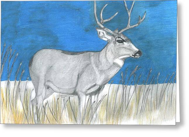 Wild Life Drawings Greeting Cards - Mule Deer Buck Greeting Card by Don  Gallacher