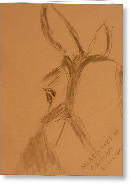Feed Drawings Greeting Cards - Mule Looks On Greeting Card by Carolina Liechtenstein