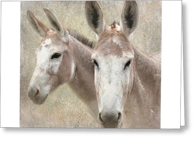 Pack Animal Greeting Cards - Mules of a Different Color Greeting Card by Angie Vogel