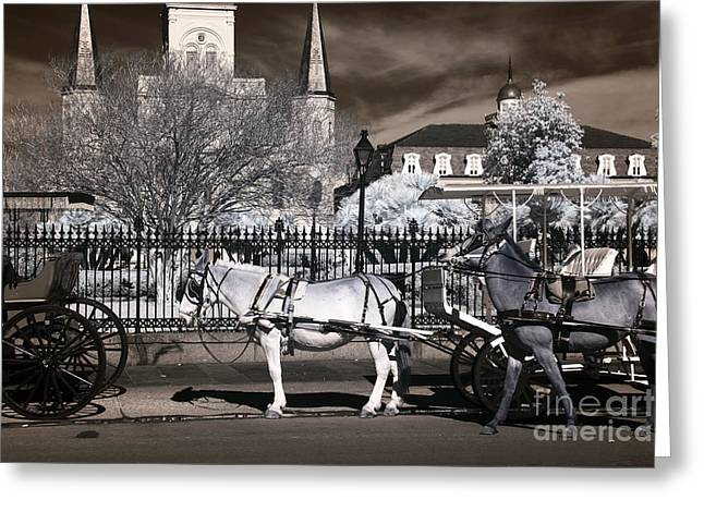 Photographers Decatur Greeting Cards - Mules on Decatur infrared Greeting Card by John Rizzuto