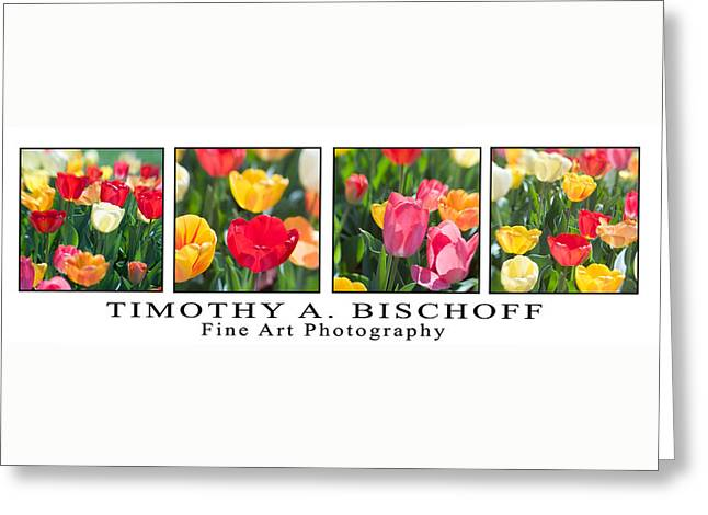 Nature Abstract Greeting Cards - Multi Image Print 004 Greeting Card by Timothy Bischoff
