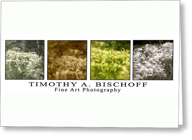Nature Abstract Greeting Cards - Multi Image Print 005 Greeting Card by Timothy Bischoff