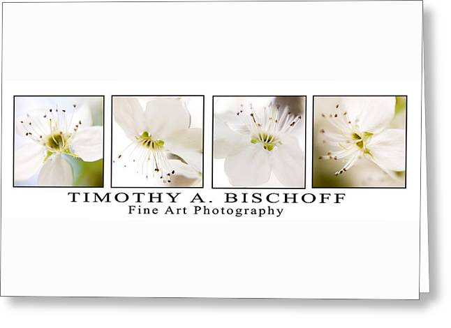 Nature Abstract Greeting Cards - Multi Image Print 008 Greeting Card by Timothy Bischoff