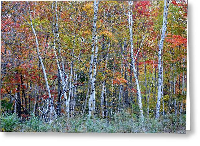 Maine Farms Greeting Cards - Multicolored Autumn in Acadia Greeting Card by Lena Hatch