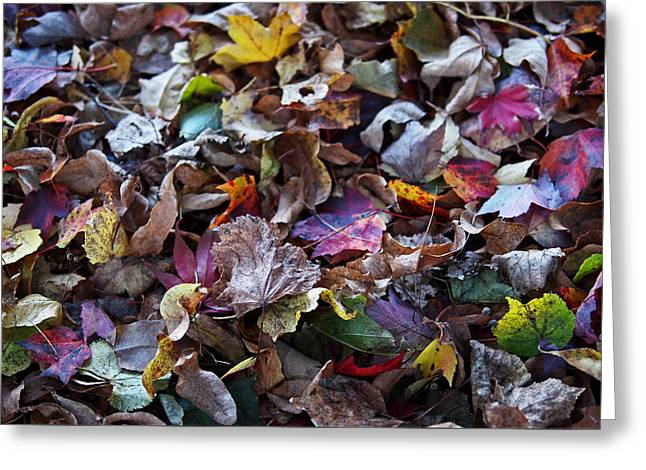 Red Leaf Greeting Cards - Multicolored Autumn Leaves Greeting Card by Rona Black