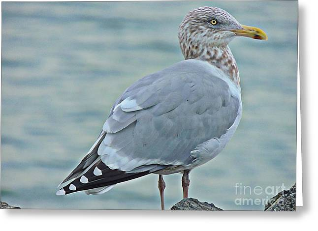 Bird Brain Greeting Cards - Multicolored Gull Greeting Card by Marcia Lee Jones