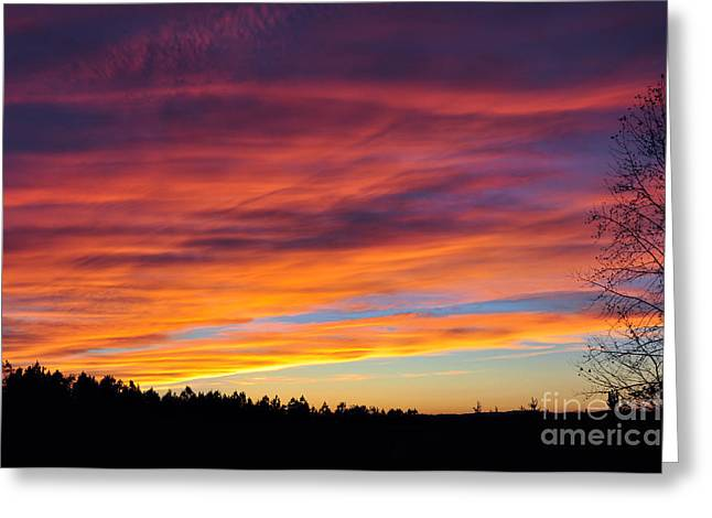 Dogwood Silhouette Greeting Cards - Multicolored Sunset Greeting Card by Stuart Mcdaniel