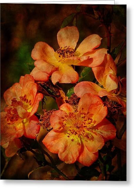 Multiflora Greeting Cards - Multiflora Roses Greeting Card by Pamela Phelps