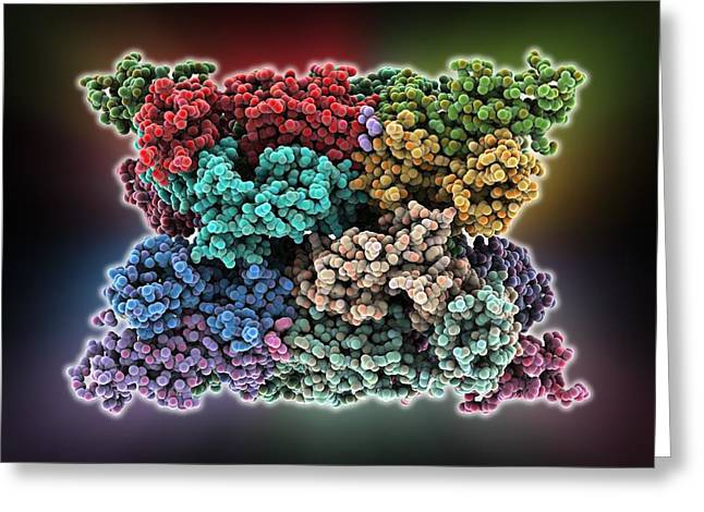 Multiple Sclerosis Greeting Cards - Multiple sclerosis protein complex Greeting Card by Science Photo Library