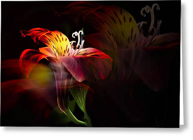 Peruvian Lily Greeting Cards - Multiplicity Greeting Card by Darlene Kwiatkowski