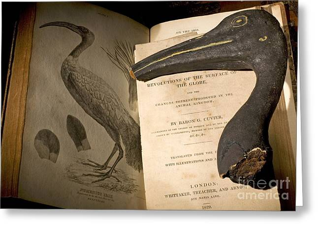 The Mummy Greeting Cards - Mummified Ibis Head With Cuvier Text Greeting Card by Paul D. Stewart