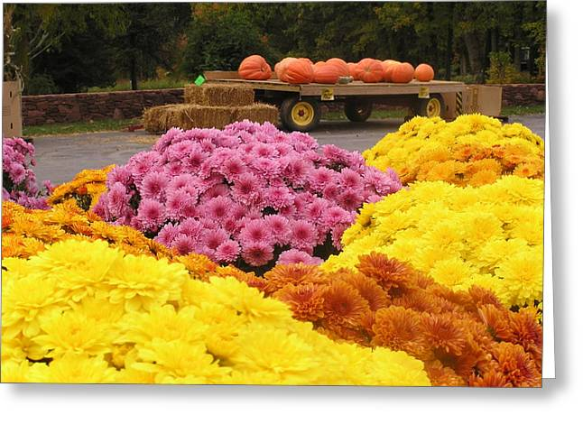Farm Stand Greeting Cards - Mums and Pumpkins Greeting Card by Julie Grandfield