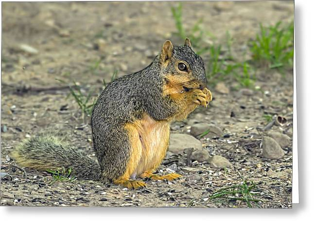 Fox Squirrel Greeting Cards - Munch Greeting Card by Andrew Lawlor