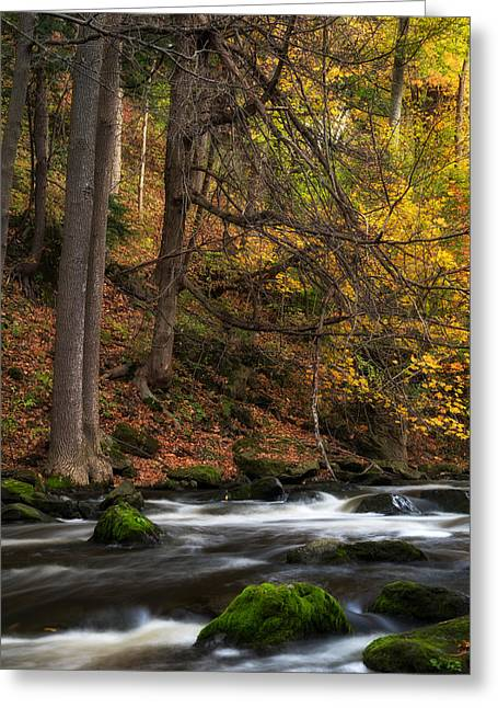 Tree Leaf On Water Greeting Cards - Murder Creek Greeting Card by Mark Papke