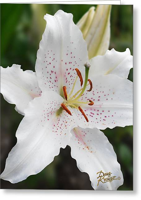 Garden Pyrography Greeting Cards - Muscadet Lily Greeting Card by Doug Kreuger