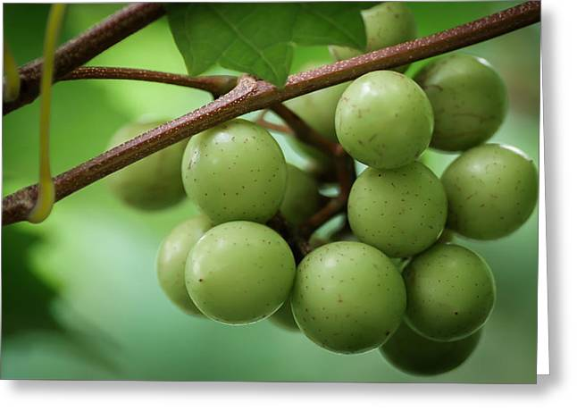 Jamesbarber Greeting Cards - Muscadine Green Greeting Card by James Barber