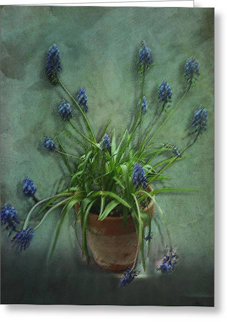 Spring Bulbs Digital Art Greeting Cards - Muscari botryoides Greeting Card by Michael White