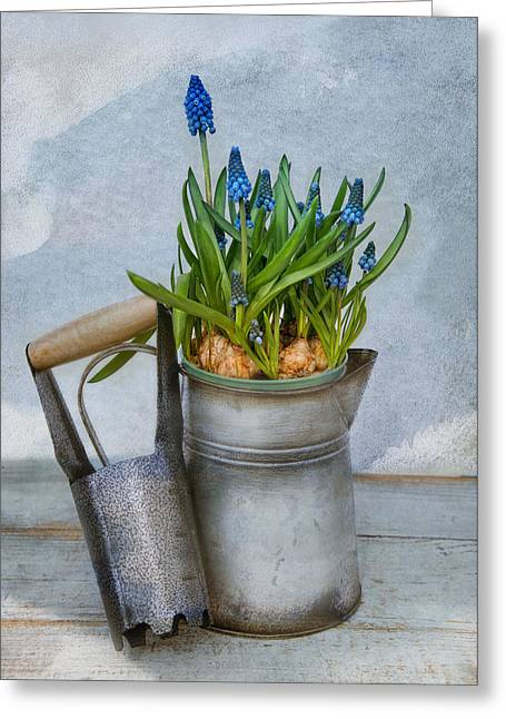 Gardening Tools Greeting Cards - Muscari Greeting Card by Robin-lee Vieira