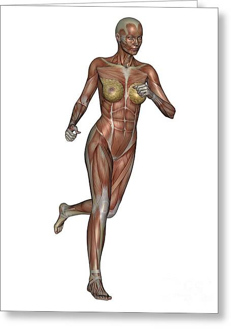 Striated Muscle Greeting Cards - Muscular Woman Running Greeting Card by Elena Duvernay