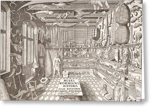 Artefact Greeting Cards - Museum Of Ole Worm, Leiden, 1655 Engraving Greeting Card by G. Wingendorp