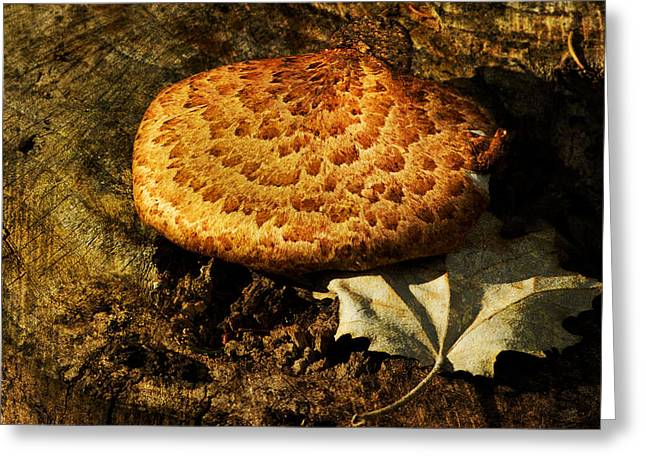 Brown Tones Greeting Cards - Mushroom and Leaf Greeting Card by Jack Zulli