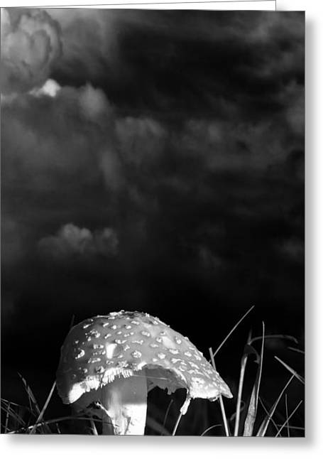 Mushroom Greeting Card by Bob Orsillo