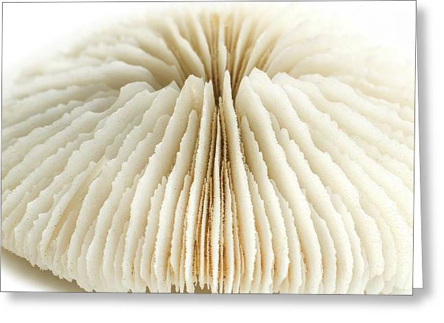 Mushroom Coral Greeting Card by Science Photo Library