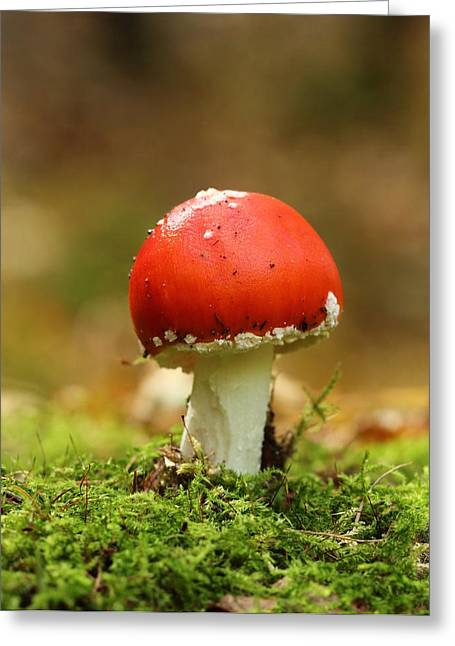 Forest Floor Greeting Cards - Mushroom Greeting Card by Heike Hultsch
