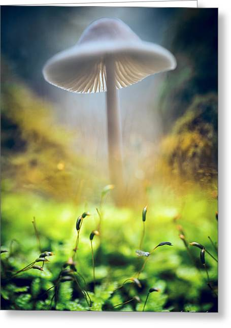 Toadstools Greeting Cards - Mushroom Mycena galericulata Greeting Card by Dirk Ercken