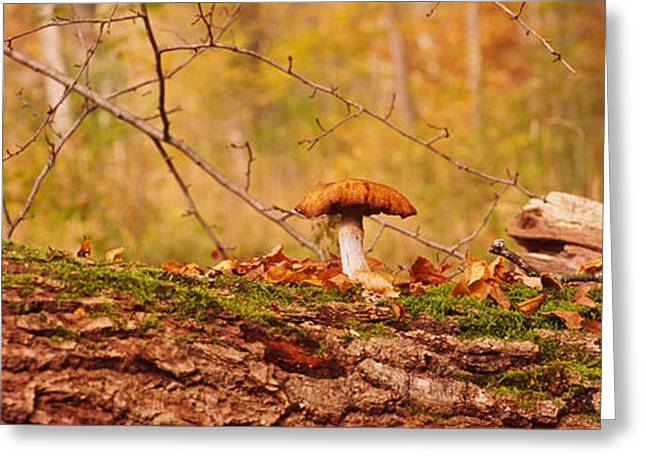 Fallen Leaf Greeting Cards - Mushroom On A Tree Trunk Greeting Card by Panoramic Images