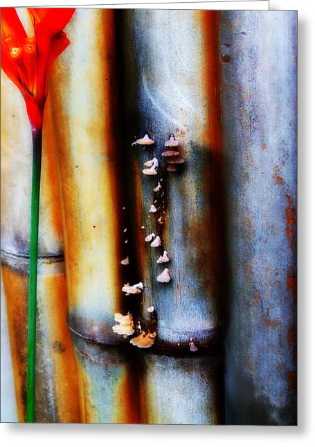 Bamboo Fence Greeting Cards - Mushroom on Bamboo 2 Greeting Card by Lyle Barker