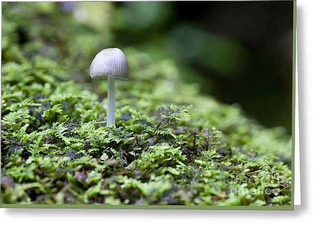 Moss Greeting Cards - Mushroom Greeting Card by Steven Ralser